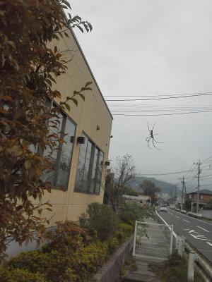 歯科医院前に蜘蛛の巣があった