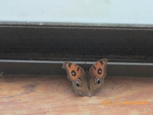 今年の最後の蝶か
