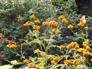 花と蝶2匹